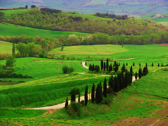 orcia4